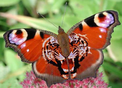 La Mariposa Mariposa e.. Animales -
