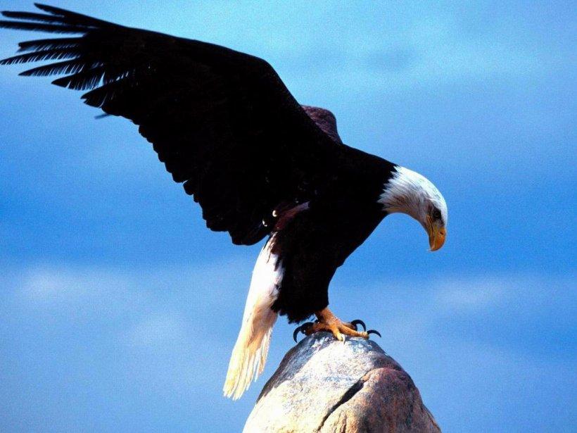 Las Aguilas Las águila.. Animales -