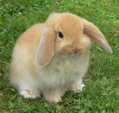 El Conejo Lo que más s.. Animales -