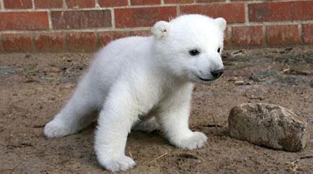 Animales bonitos - animales en peligro de extinción - Animales