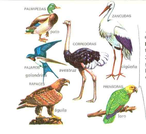 Los Animales - Oviparos - Animales