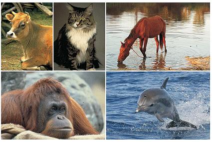 Los Animales - viviparos - Animales