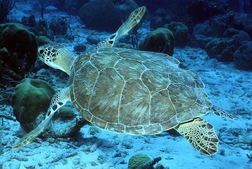 15387_turtle%203.jpg