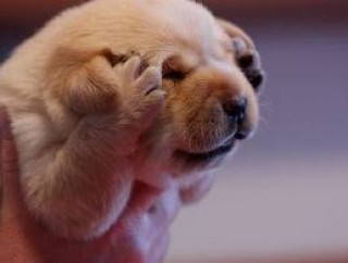 Puppy reaction while watching the Google updates list of 2011