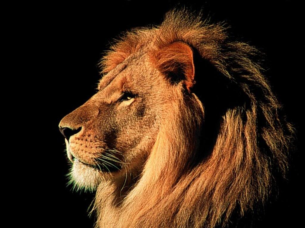4805_lion122