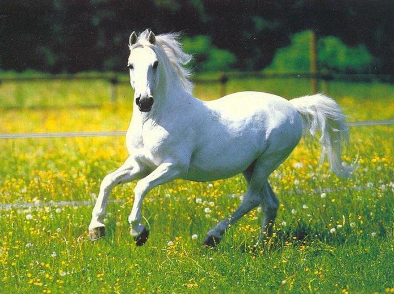 http://www.studentsoftheworld.info/sites/animaux/img/2176_horsessss.jpg