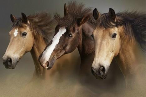 http://www.studentsoftheworld.info/sites/music/img/23704_horses.jpg