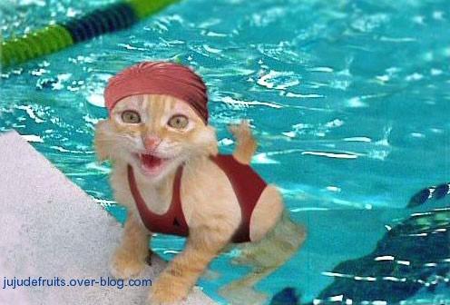 dans fond ecran drole 3575_chat-humou-drole-piscine