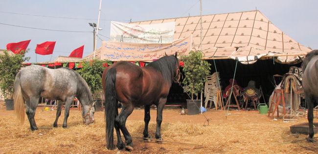 Repos des chevaux part..
