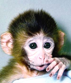 Extinction of Monkeys and