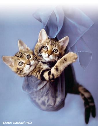 kittens. Kittens!