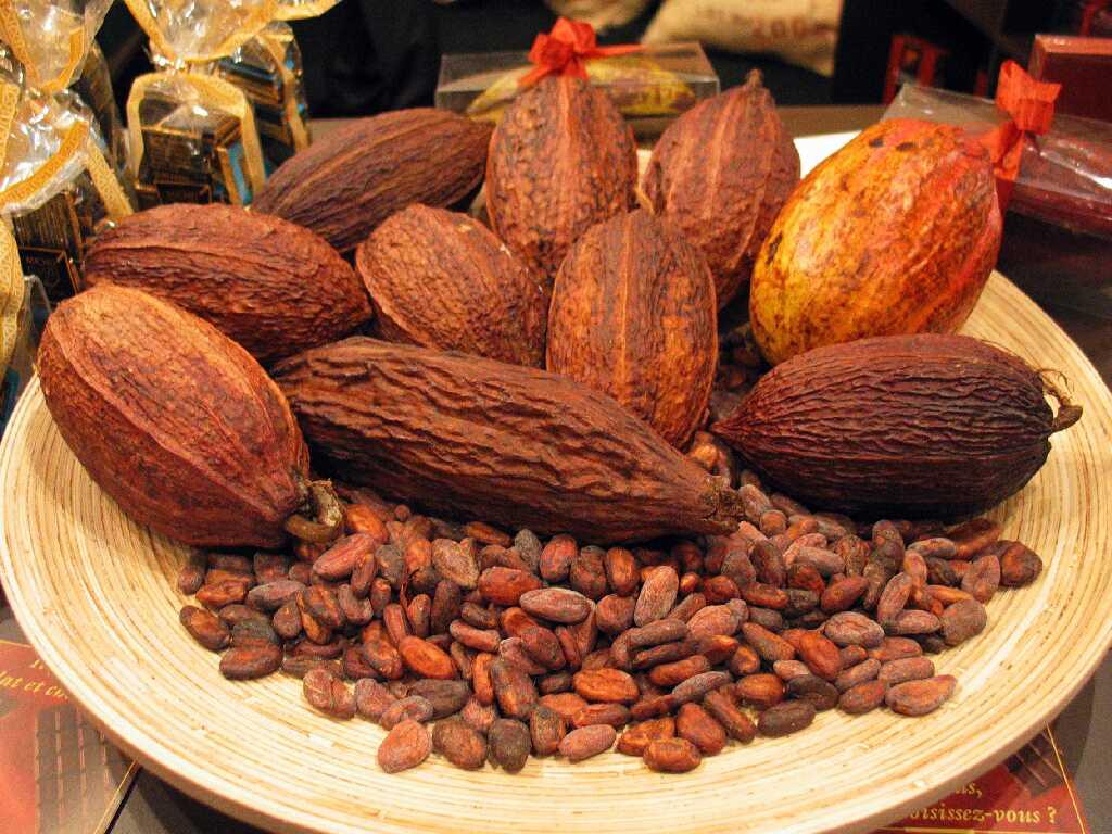 Cette rubrique l histoire du chocolat l histoire du chocolat